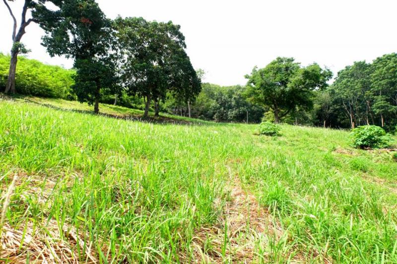 Photo Superbe terrain à vendre à Nai Harn 1600 m².