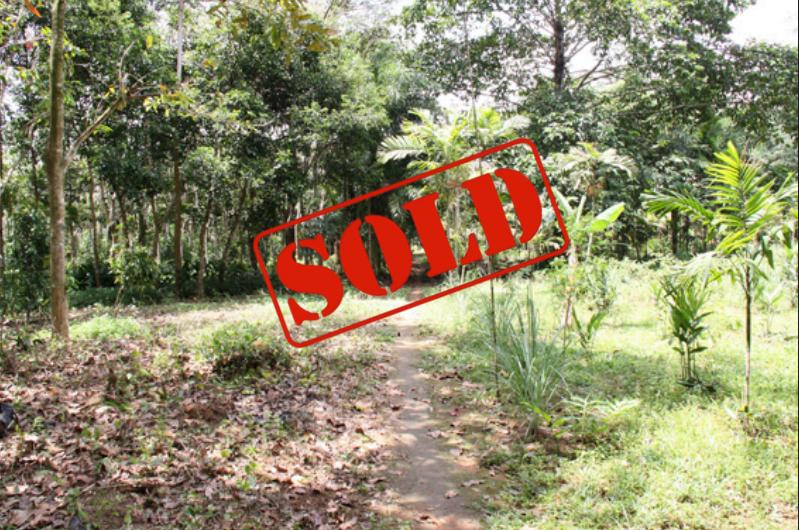 Photo Vente terrain à Paklok, Phuket : 12960 m2