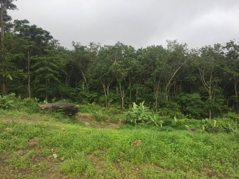 Picture Phuket plot to sell on the hill of Kamala