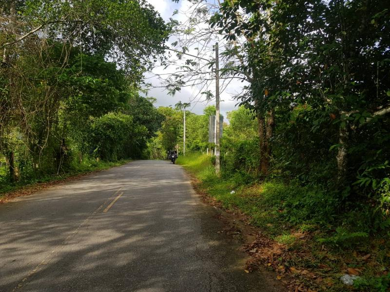Picture 8000 m2 of land to sell in Layan, Phuket