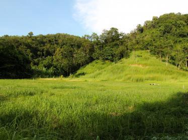 Picture Land  for sale In Koh Sirey: 31 Rai.