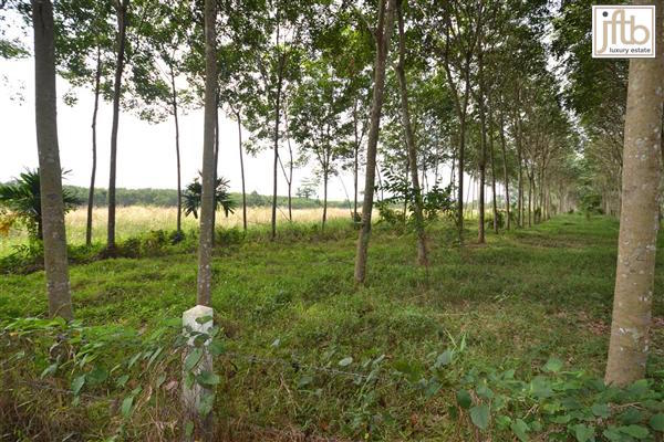 Picture Land for sale in Thalang, Phuket, Thailand