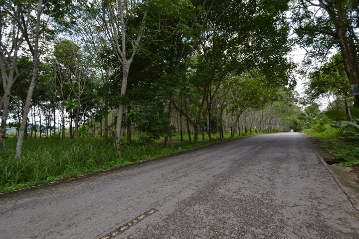 Picture 44600 m2 of Prime Building Land for Sale in Thalang, Phuket
