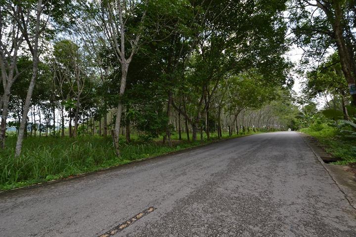 Photo 44600 m2 de terrain constructible à vendre à Thalang, Phuket