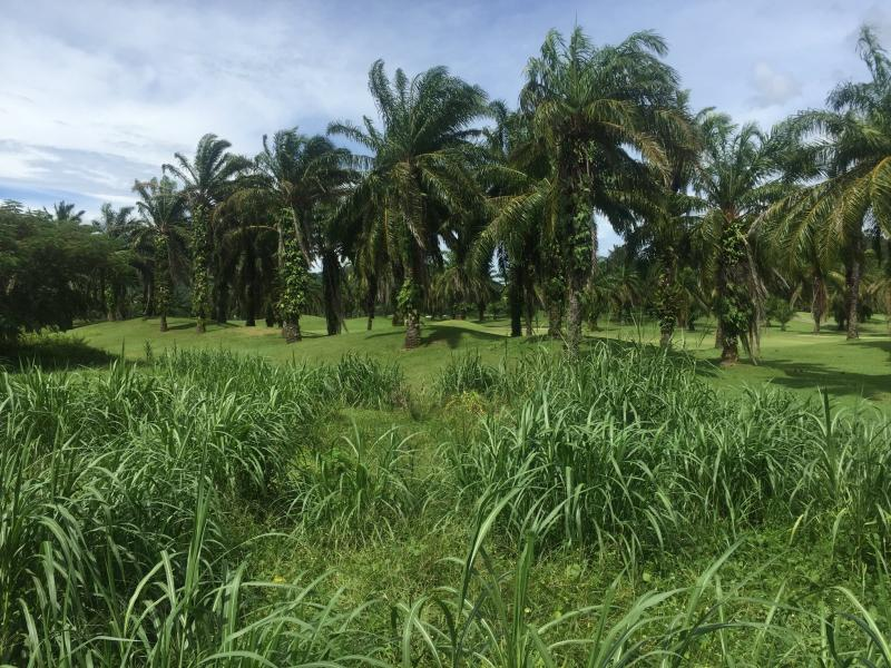 Picture Superb Plot for Sale in Loch Palm Kathu Phuket