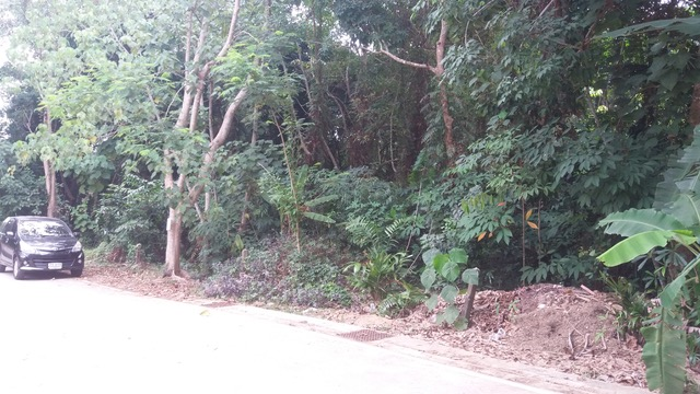 Picture Plot of 1600 m2 for sale in Thalang, Phuket