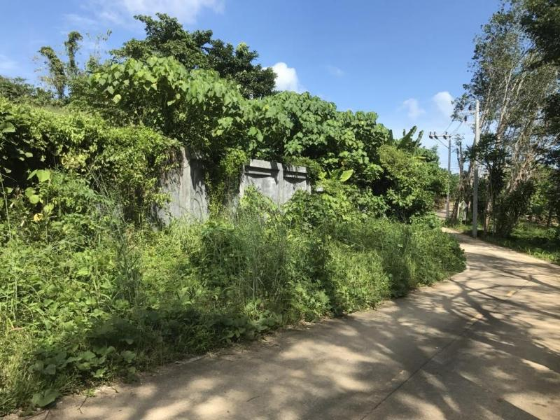 Picture Cheap plot to sell in Rawai, Phuket