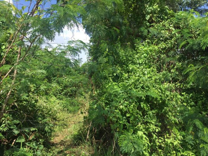 Picture 8000 m2 of land for sale in Rawai, Phuket, Thailand