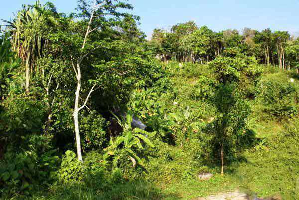Picture  Phuket land for sale near Laguna - Thailand