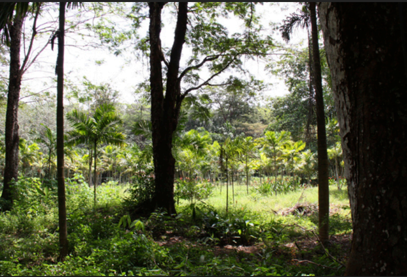 Photo 12960 m2 of land for sale in Paklok, Phuket, Thailand with Chanote