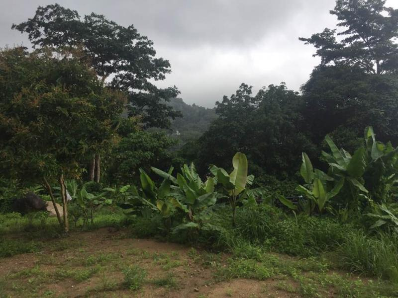 Photo 40000 m2 of land to sale on the hills of Kamala, Phuket, Thailand