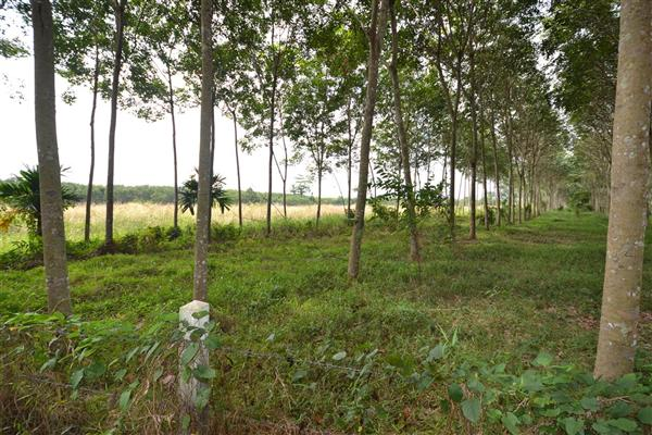 Photo Land for sale in Phuket,Thalang, Thailand