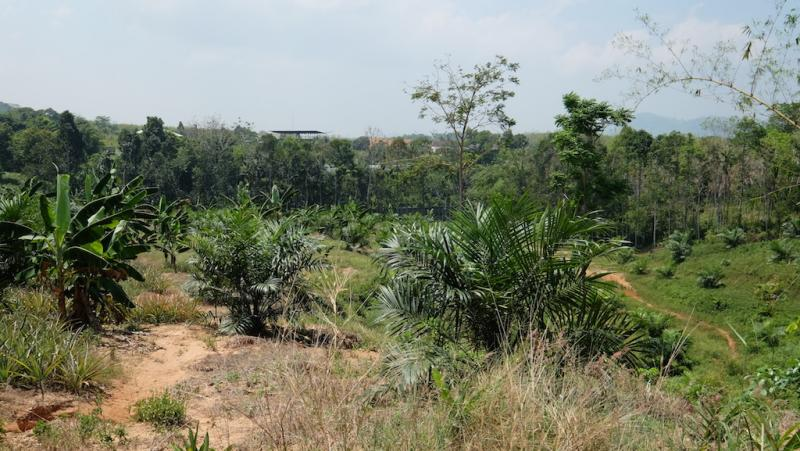 Photo Phuket 12800 m2 of land for sale in Paklok