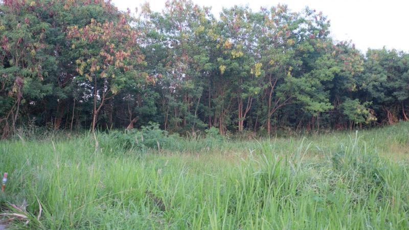 Photo Phuket prime land for sale in Sai Yuan, Rawai