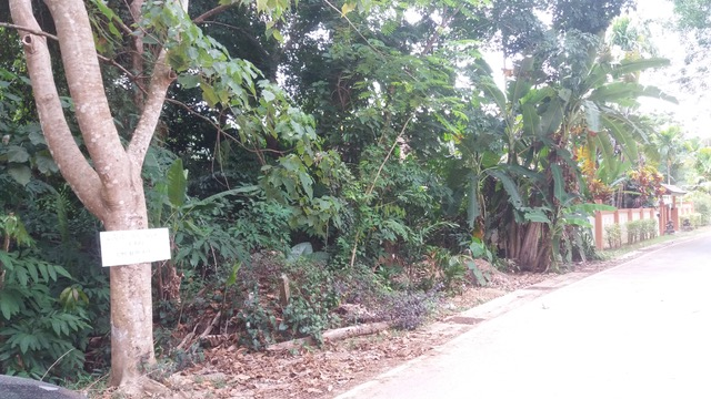 Photo Plot of 1600 m2 for sale in Thalang, Phuket