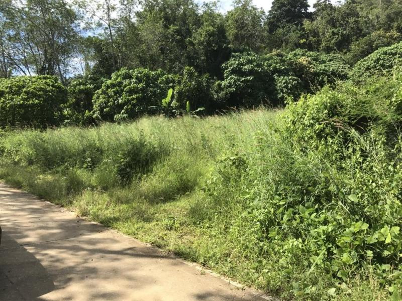 Photo Plot of 750 m2 for sale in Rawai, Phuket, Thailand
